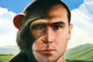 Chimp Human
